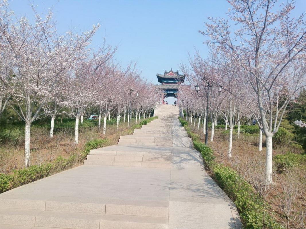 胜利山公园的樱花(配诗)