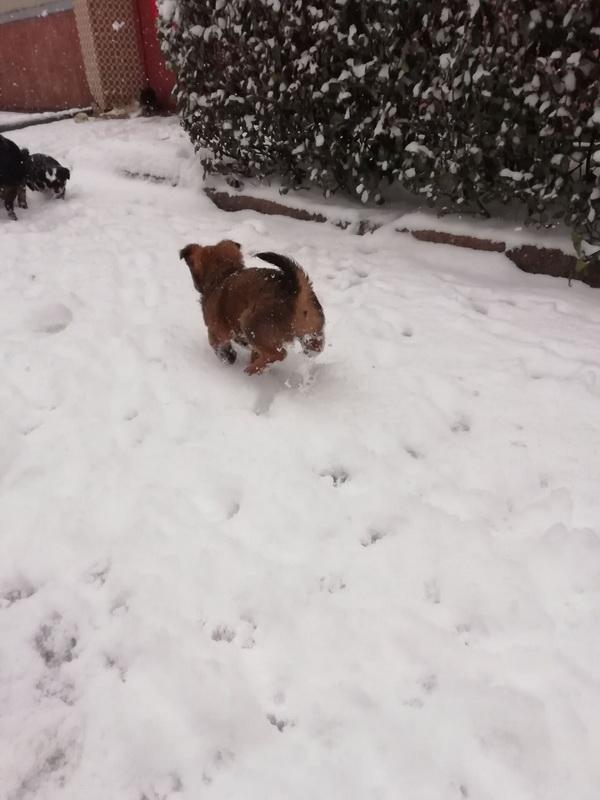 让我在雪地上撒点野