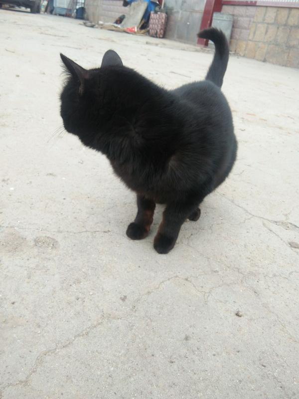 一只小黑猫