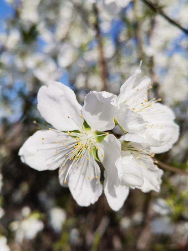 春天在身边