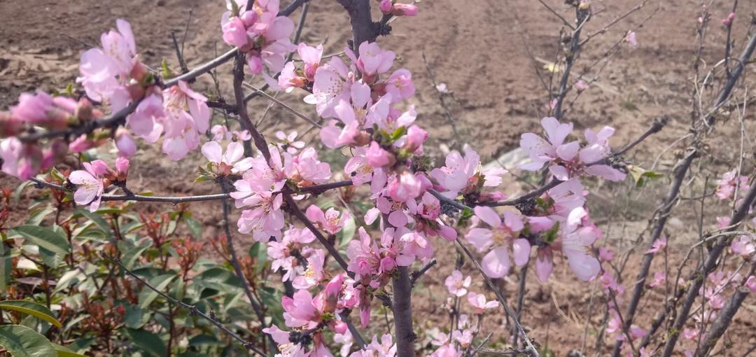漫步桃花园