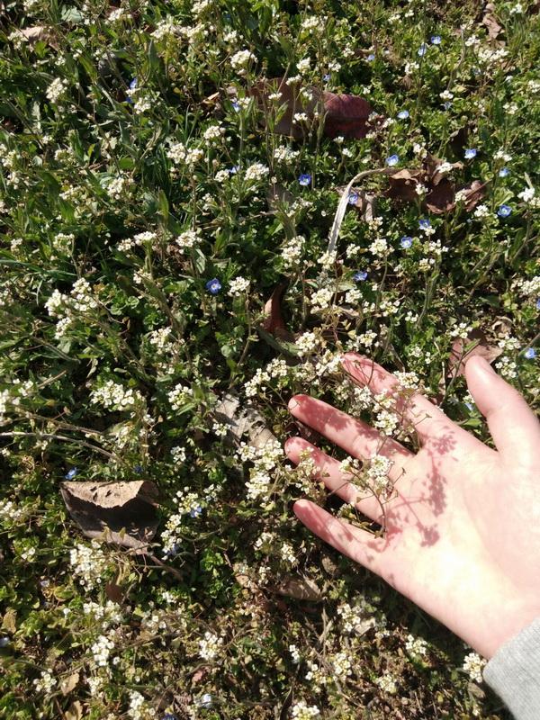 路边的小野花
