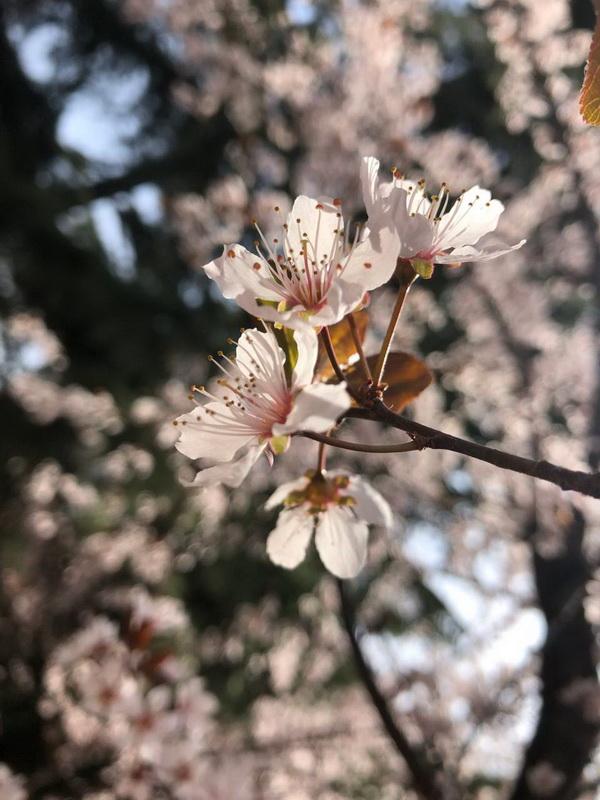 春来墨河公园